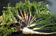 100% natural and organic umbelliferous vegetables, carrot, parsley, parsnip and fennel with close relative, poison. hemlock, used to execute Socrates